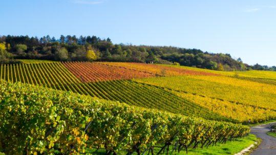 Weingut Felshof